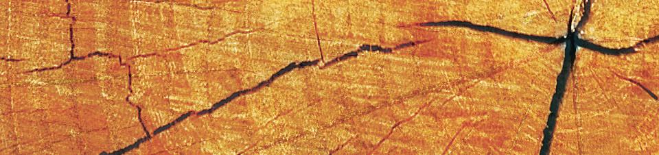 Tree trunk Whiteboard